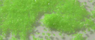 Сульфат празеодима(III)