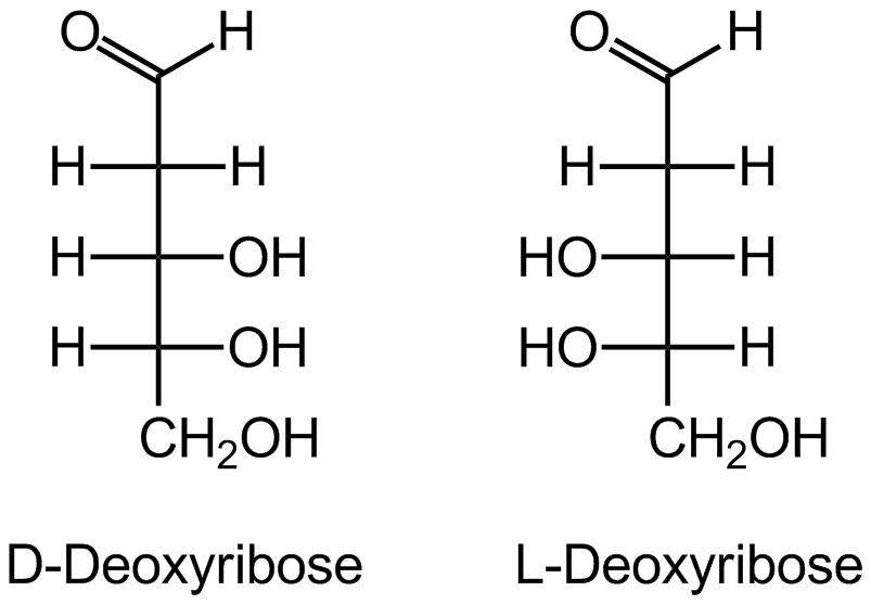 Дезоксирибоза