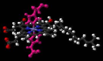 Гем а в цитохром-оксидазе с крепится двумя боковыми гистидиновыми цепочками (показаны розовым)