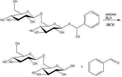 Amigdaline hydrolysis.jpg