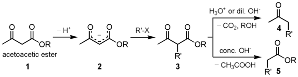 Acetoacetic ester synthesis.png