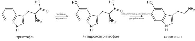 Trp-5ht-pathway-ru.png